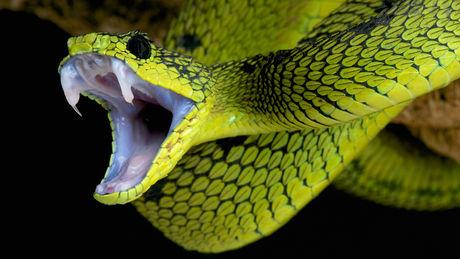 serpent-013